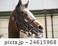 天栄見学会 馬 24615968