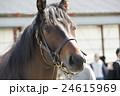 天栄見学会 馬 24615969