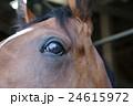 天栄見学会 馬 24615972