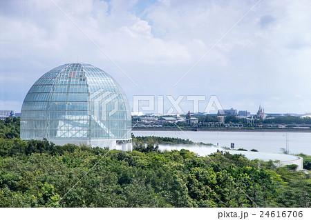 葛西臨海水族園 24616706