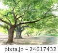 木 新緑 公園のイラスト 24617432