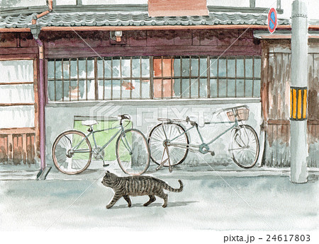 路地を猫が歩いている 24617803