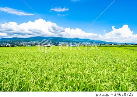 【長野県】田園風景と夏空 24620725