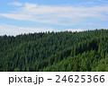 杉の森 24625366