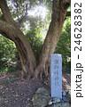 潮御崎神社 24628382