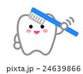 歯 白バック 笑顔のイラスト 24639866