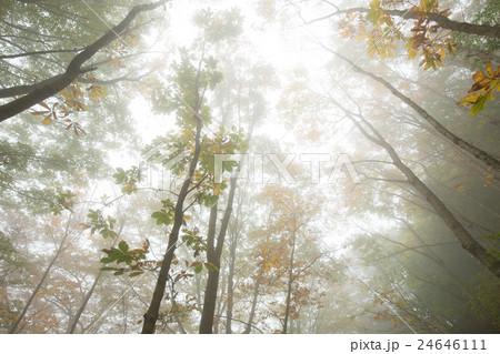 霧が舞う森 24646111