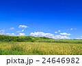 水田 田 稲の写真 24646982