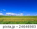 水田 田 稲の写真 24646983