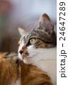 猫の横顔 24647289