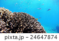 魚 海中 珊瑚の写真 24647874