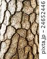 松 木肌 樹皮の写真 24652446