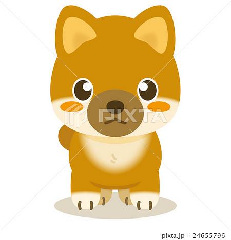 いぬっこ倶楽部 柴犬 24655796