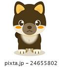 柴犬 黒柴 犬のイラスト 24655802