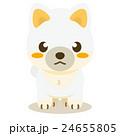 柴犬 白柴 犬のイラスト 24655805