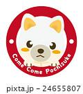 柴犬 白柴 犬のイラスト 24655807