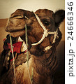 駱駝 砂漠 インドの写真 24666346
