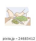 キャベツ 切る 千切りのイラスト 24683412