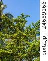 樹木 樹 ツリーの写真 24689166