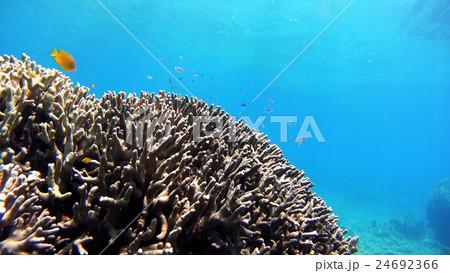 沖縄 阿嘉島の水中撮影 24692366