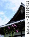 般若寺のコスモス 24695411