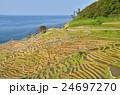 千枚田(石川県輪島)近景 24697270
