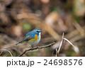 青い鳥 24698576