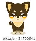 チワワ 犬 仔犬のイラスト 24700641