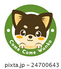 チワワ 犬 仔犬のイラスト 24700643