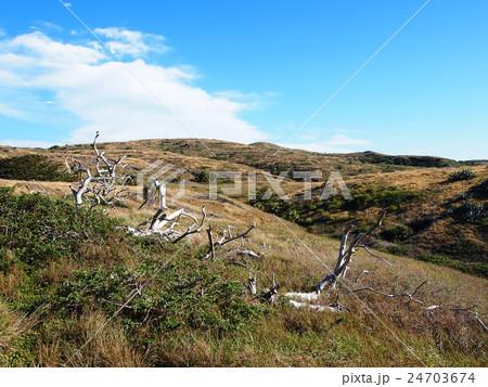 聟島(ケータ島) 枯れ木と荒野 24703674