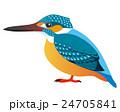 川蝉 魚狗 翡翠のイラスト 24705841