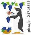 アデリーペンギン ペンギン ぶどう狩りのイラスト 24716825