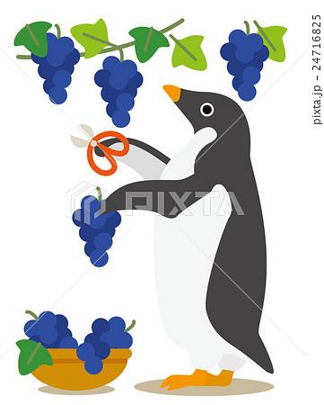 アデリーペンギン ぶどう狩り 24716825