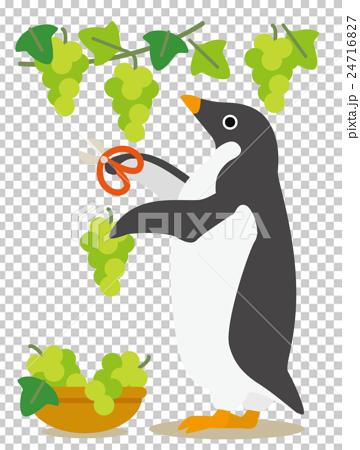 アデリーペンギンな日々 秋の収穫ぶどう狩り 24716827