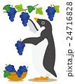 アデリーペンギン ペンギン ぶどう狩りのイラスト 24716828