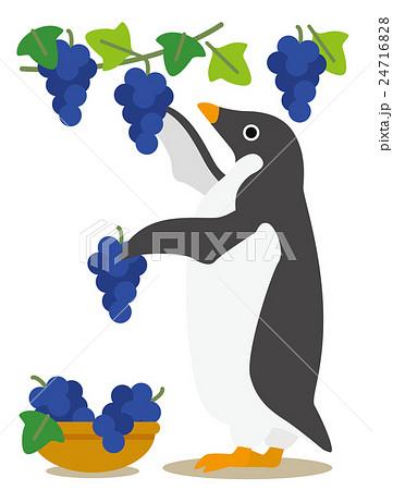 アデリーペンギン ぶどう狩り 24716828