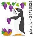 アデリーペンギン ペンギン ぶどう狩りのイラスト 24716829