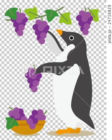 アデリーペンギンな日々 秋の収穫ぶどう狩り 24716829