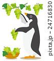 アデリーペンギン ペンギン ぶどう狩りのイラスト 24716830
