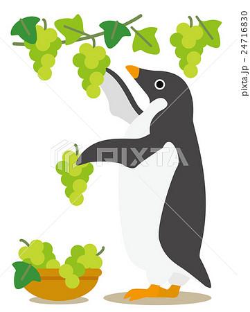アデリーペンギン ぶどう狩り 24716830