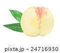 清水白桃 水彩画 24716930