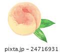 清水白桃 水彩画 24716931