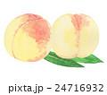 清水白桃 水彩画 24716932
