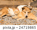 dog and cat lying together 24719865