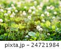 クローバーの草むらにある幸運の四つ葉のクローバー 逆光 草バック 24721984