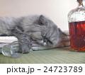 飲みすぎてネコなのにトラ 24723789