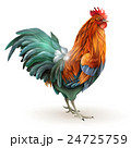 鳥 鶏 おんどりのイラスト 24725759