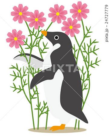 アデリーペンギン コスモス(ピンク) 24727779