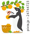 アデリーペンギン ペンギン 梨狩りのイラスト 24744723