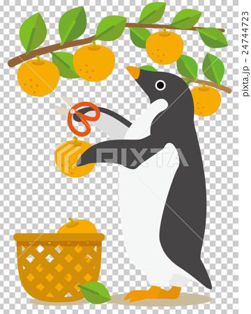 アデリーペンギンな日々 夏から秋へ梨狩りの季節 24744723